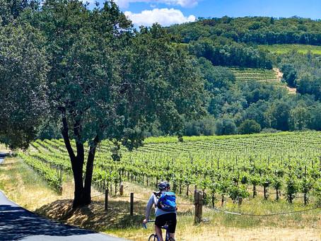 Exploring Sonoma, CA, By Bike