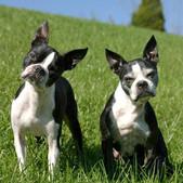 Jessie and Adia.jpg