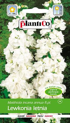Lewkonia letnia biała Weiss