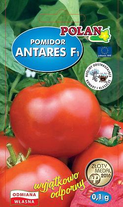 Pomidor gruntowy Antares - mieszaniec 0,1g.