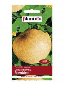 Dynia olbrzymia BAMBINO 5g