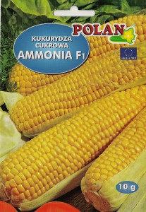 Kukurydza cukrowa Ammonia - mieszaniec 10g.