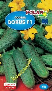 Ogórek gruntowy Borus - mieszaniec 5g.
