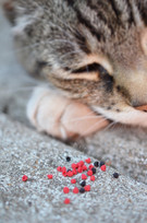 giant cat and raspberries, 2017