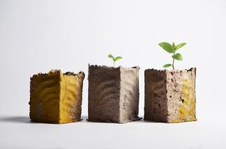 planters of DOOM