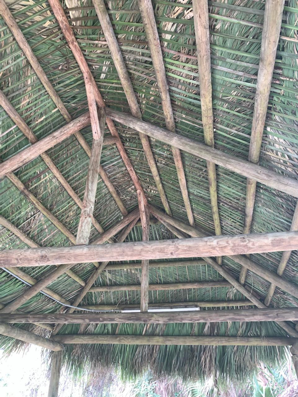 Image shows the Inside of the new Chickee Hut roof looking up