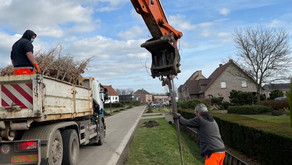 Gemeente Malle plant 175 laanbomen