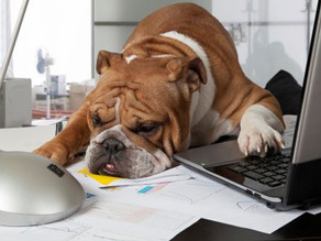 Huisdieren op de werkvloer