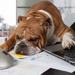 Animaux domestiques sur le lieu de travail