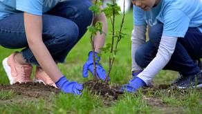 144 nieuwe bomen voor geboortebos in Lille