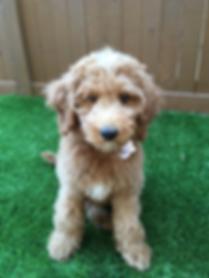 Ethan Hirschberg's dog