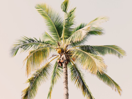 Is coconut the answer we all have been looking for?