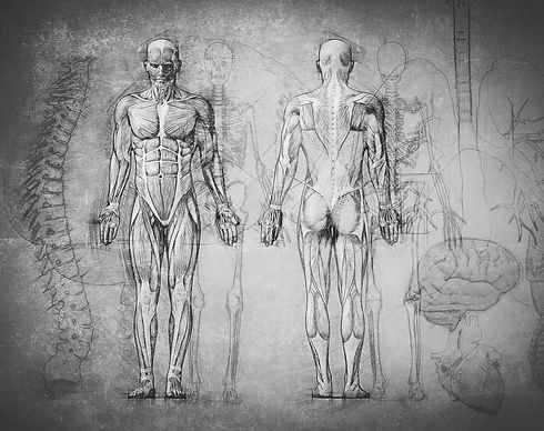 Anatomy%2520Drawing_edited_edited.jpg