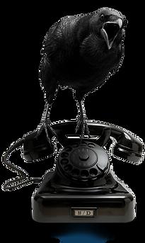Muskoka Design Contact Image - Raven