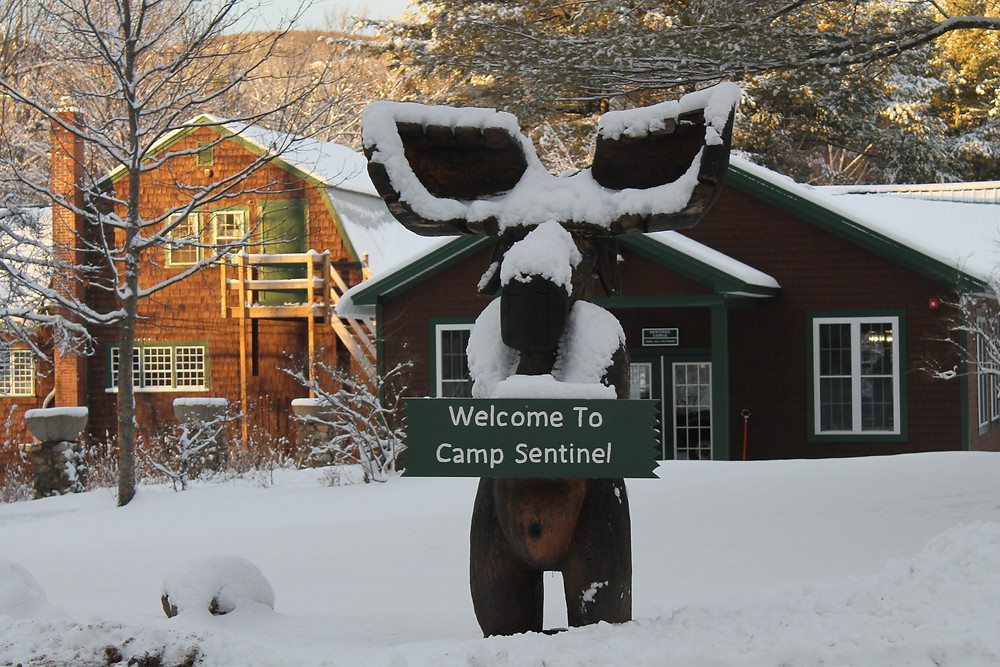 Bennie the moose covered in fresh snow.