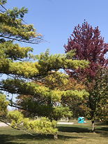 Luckey, Ohio Parks