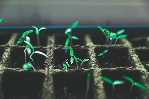 Tiny Green Plants