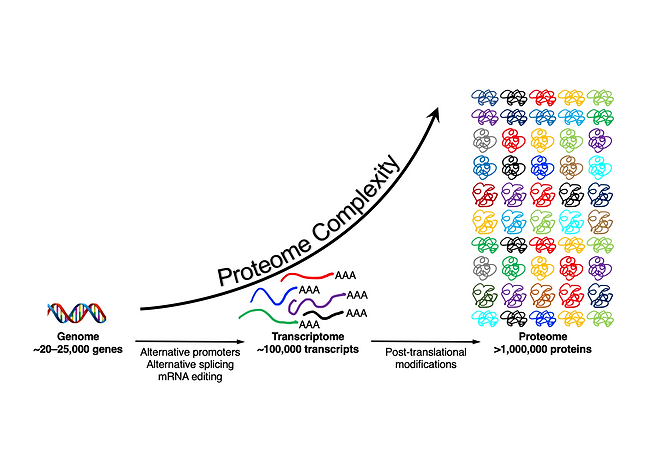 proteome complexity.png