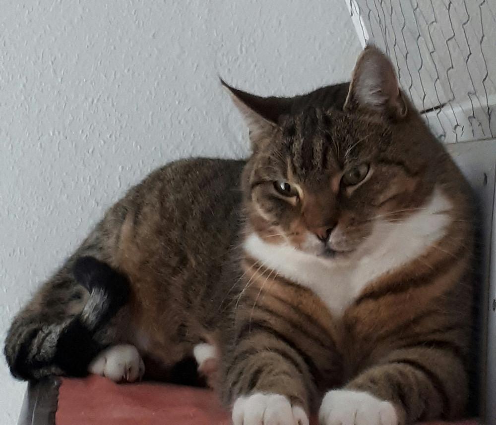 Freigängerin SIMI war auf Kurzurlaub in der Katzenpension-Happycat