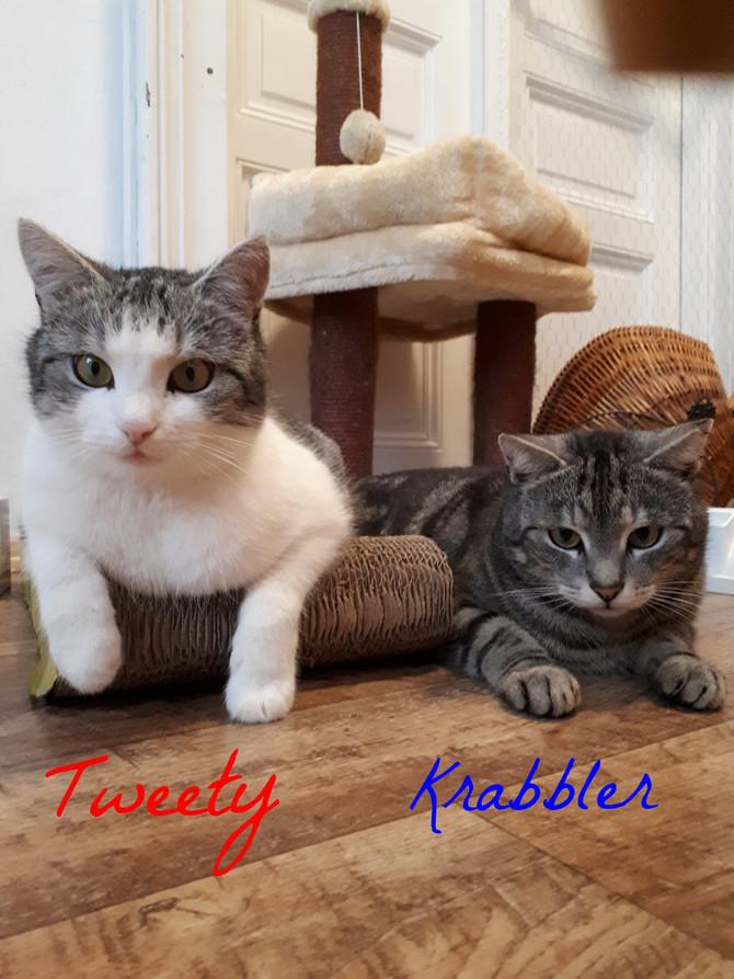 Tweety und Krabbler beide 4 Jahre jung