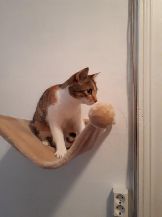 Mogli und Stella zum zweiten Mal in der Katzenpension-HappyCat