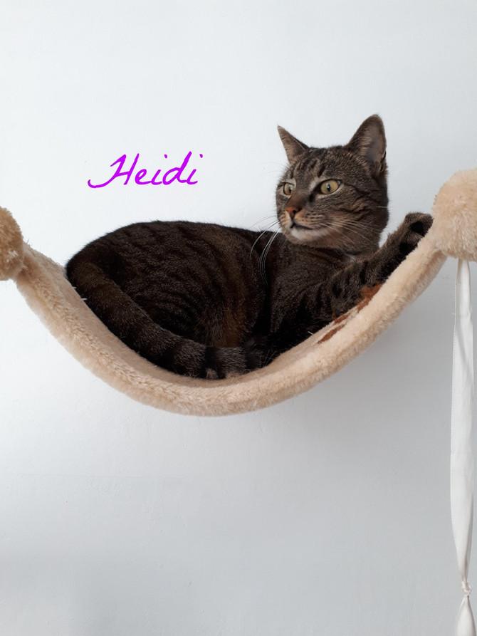 Zum 2. Mal bei uns zu Besuch in der Katzenpension Happy Cat
