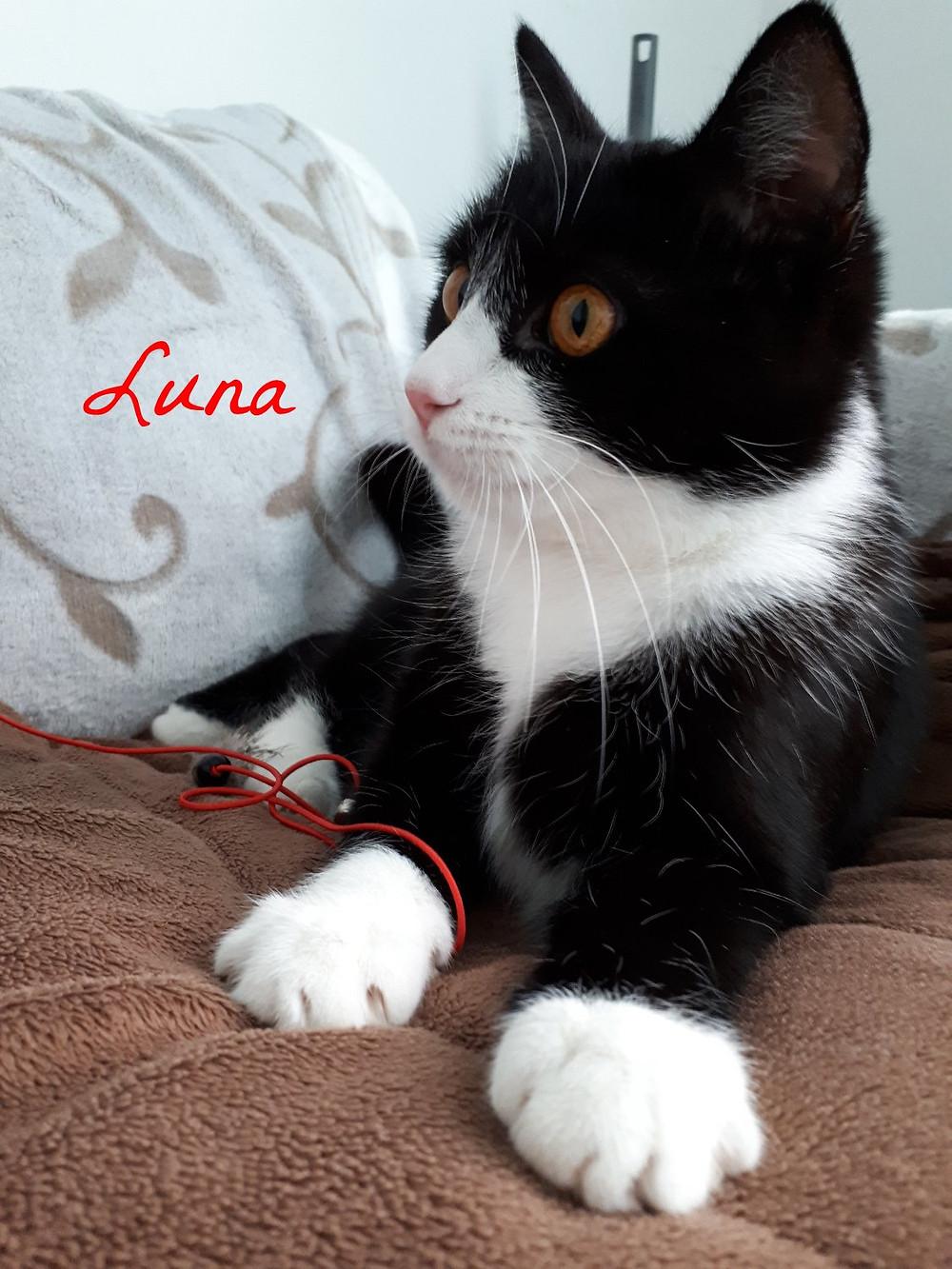 Luna knapp ein Jahr und so ein tolles Kätzchen