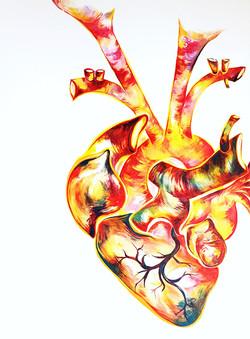 anatomic heart one.JPG