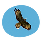 itinerary-bird-in-flight.png