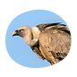 itinerary-full-day-eagles-and-vultures.p