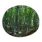 itinerary-mountain-beech-woods.png
