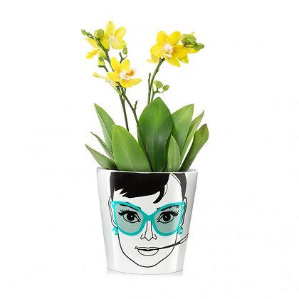 Elegant Audrey, small: Flower Power
