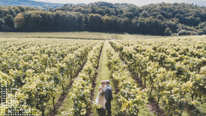 All you need to know to have the best daytime wedding