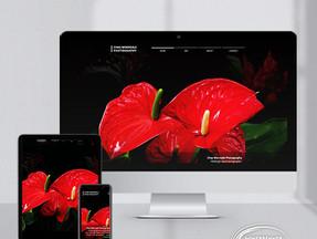 Website Design | eCommerce