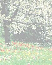 spring_blossoms_opaque.jpg