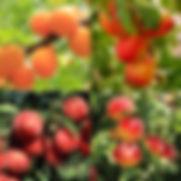 FruitSaladTree.jpeg