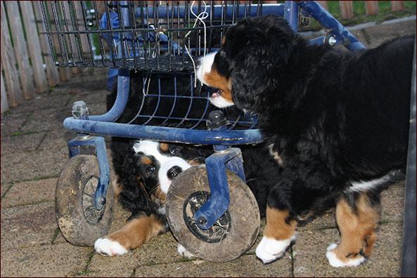 …der Reifen ist lecker!