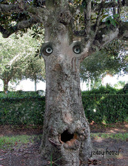 Beware of the Trees