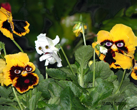 Don't call me Pansy