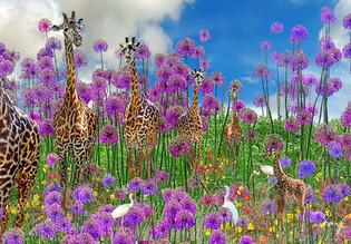 giraffe web.jpg
