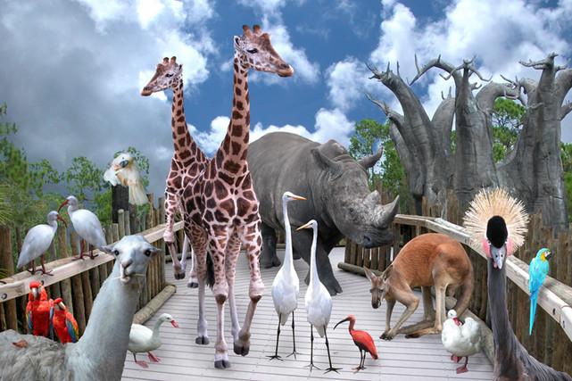 Gang at the Zoo