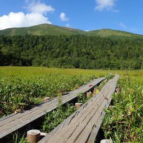 2020/8/24 上州の山旅 Day2 至仏山