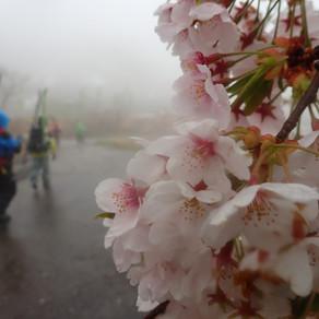 2021/4/24~25 火打山~笹倉温泉