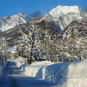 1月末の雪壁