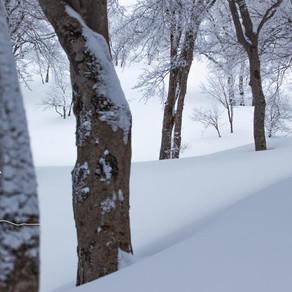 「鍋倉の森」写真展、スライドトークショー、写真集発売のご案内