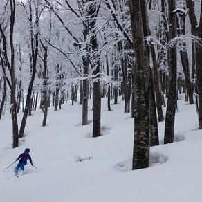 2019/3/25~28 信越トレイル スキー旅 Day4