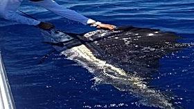 Deep-Sea fishing to catch Marlin