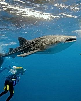 snorkel2.png