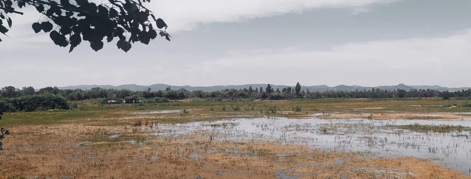 Soundscape del Delta del Llobregat