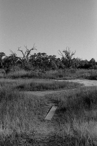 paths. savannah, ga.